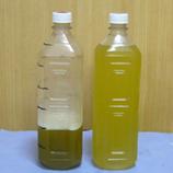 緑茶保存 45 8.9x.jpg
